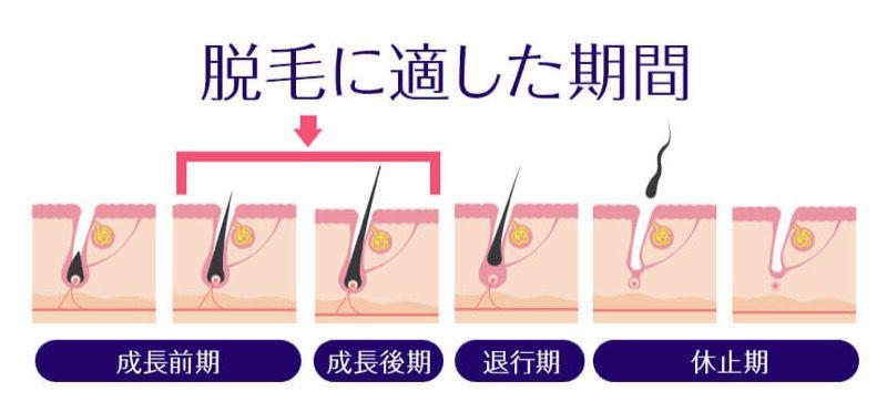 毛の生え方の周期